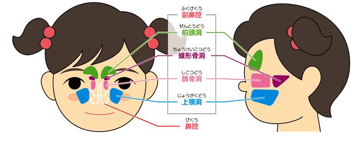 副鼻腔とは、どこにあるのですか